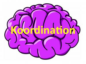 Hjerner_koordination